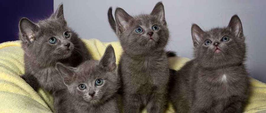 Kittens-900-Slider